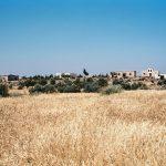 La producción de trigo en Siria: de la autosuficiencia a la importación