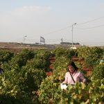 La industria israelí explota la tierra y el trabajo de los palestinos