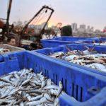 Desaparición de sectores productivos palestinos: mercado interno y ocupación