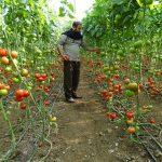 La violación a los derechos de los agricultores desplazados en el noroeste sirio